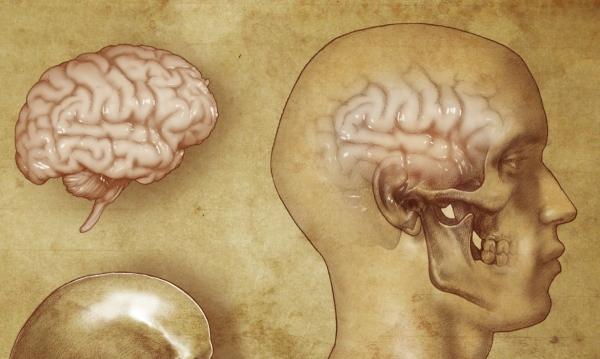 brain-copy